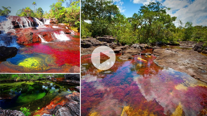 The Magic Of The Caño Cristales, Colombia's Rainbow River (video)